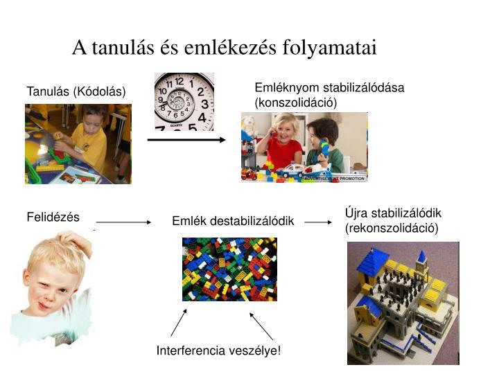 A tanulás és emlékezés folyamatai