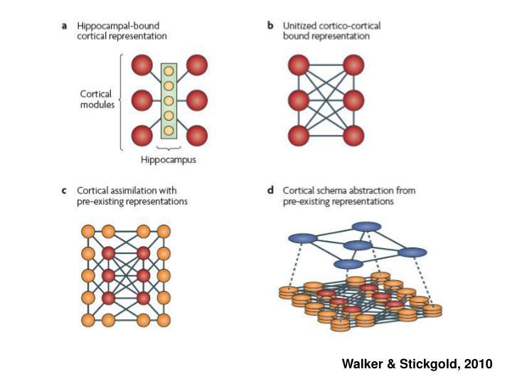 Walker & Stickgold, 2010