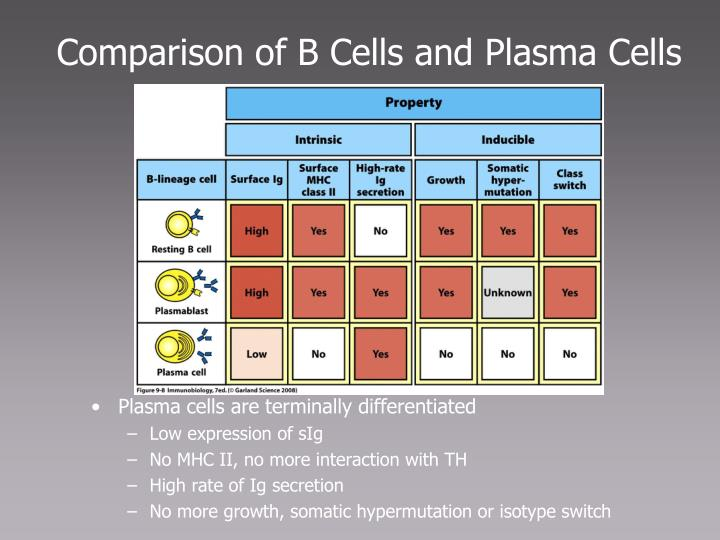 Comparison of B Cells and Plasma Cells