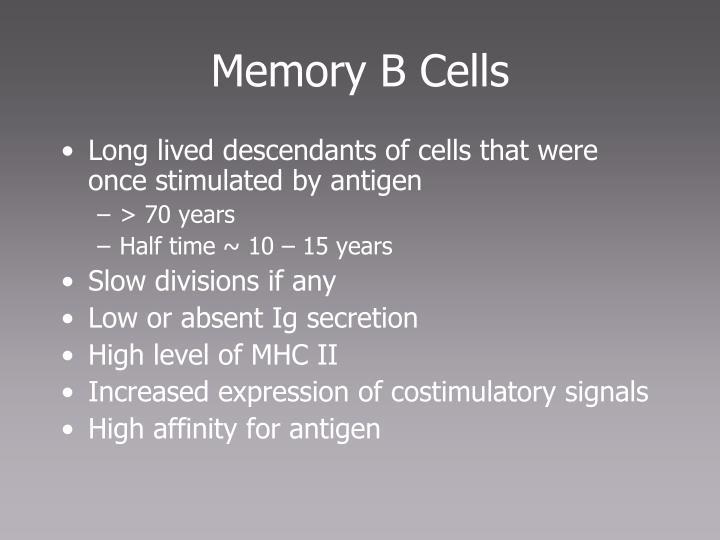 Memory B Cells
