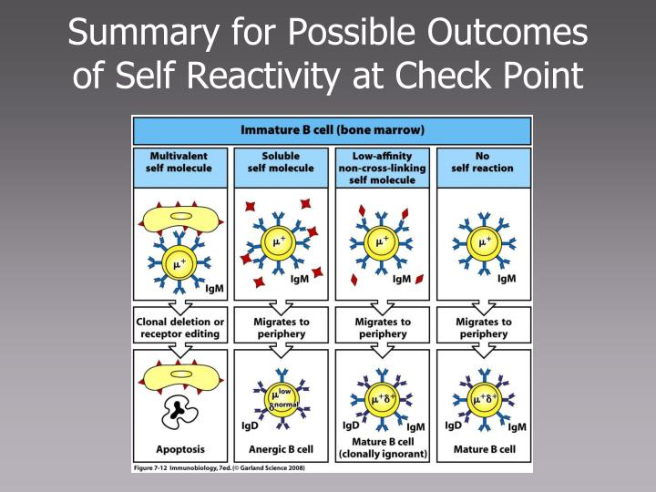 Summary for Possible Outcomes of Self Reactivity at Check Point