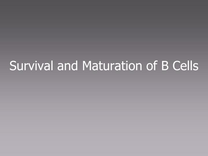 Survival and Maturation of B Cells