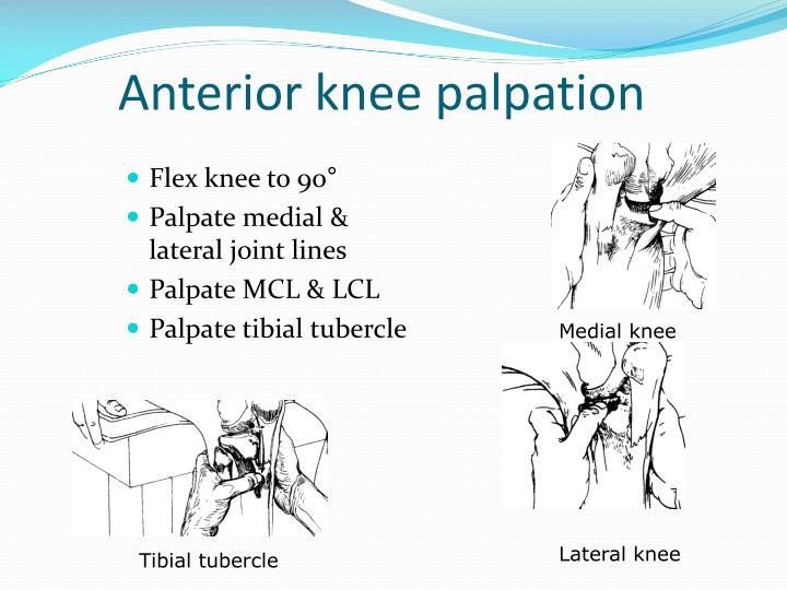 Anterior knee palpation