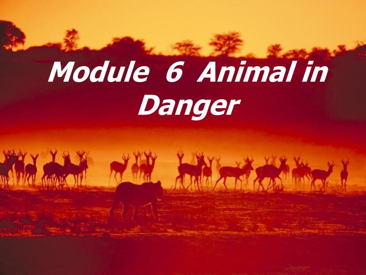 Module 6 animal in danger