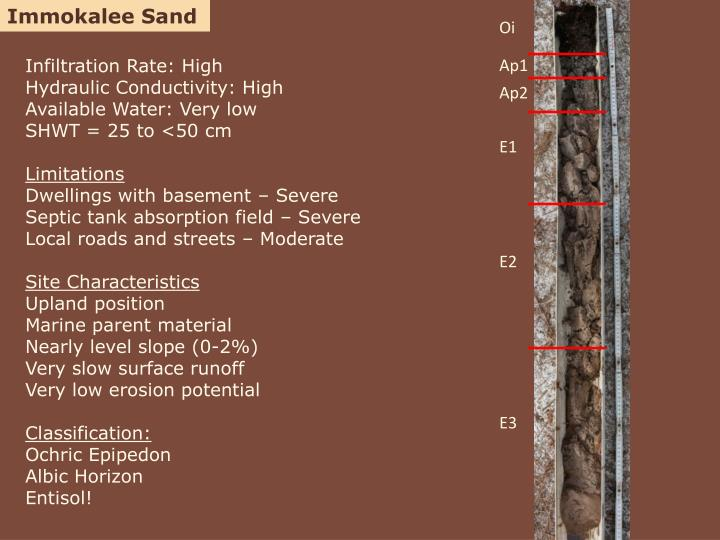 Immokalee Sand