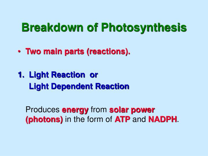 Breakdown of Photosynthesis