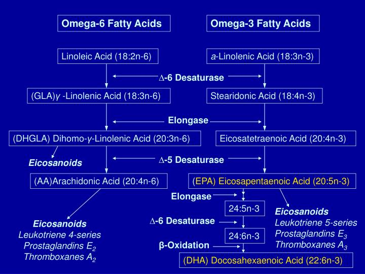 Omega-6 Fatty Acids