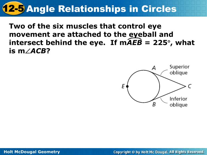 Two of the six muscles that control eye movement are attached to the eyeball and intersect behind the eye.  If m