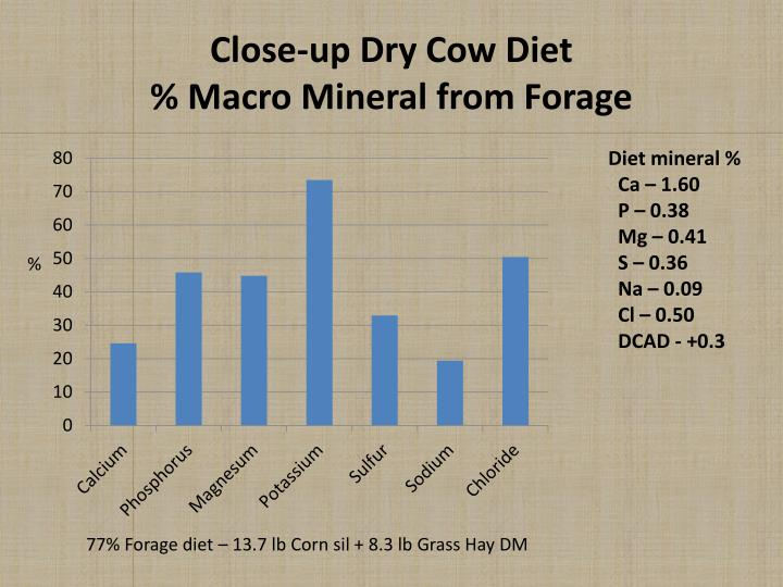 Close-up Dry Cow Diet