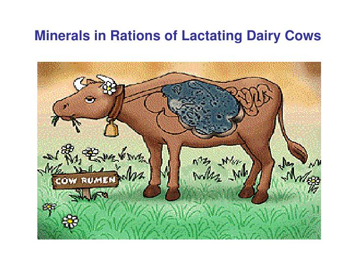 Minerals in Rations of Lactating Dairy Cows