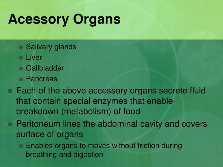 Acessory Organs
