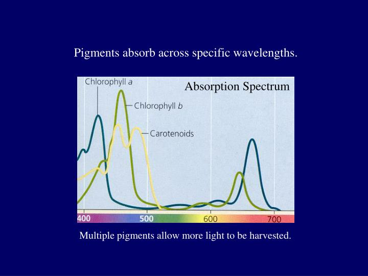 Pigments absorb across specific wavelengths.