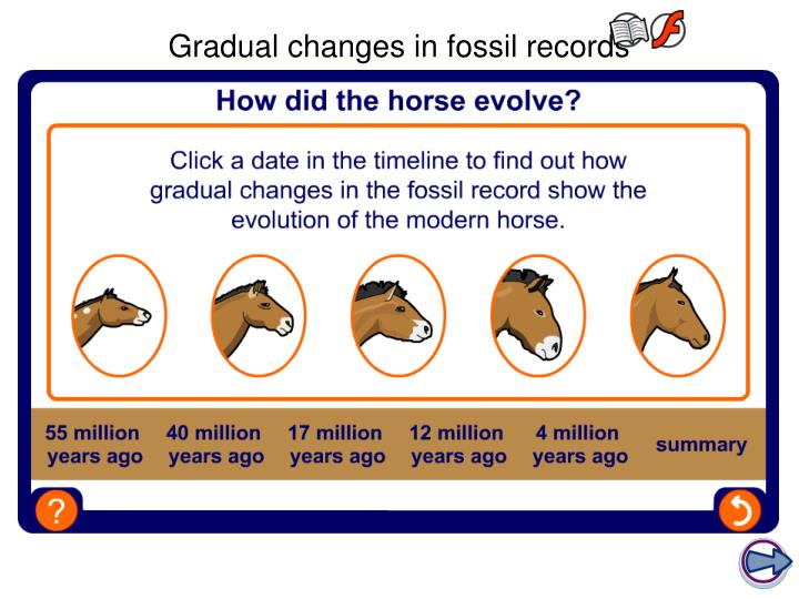 Gradual changes in fossil records
