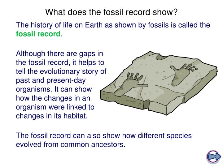 What does the fossil record show?