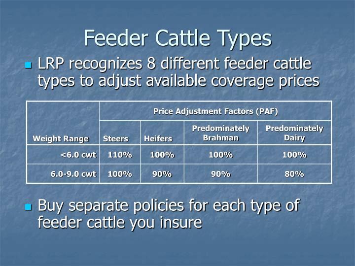 Feeder Cattle Types