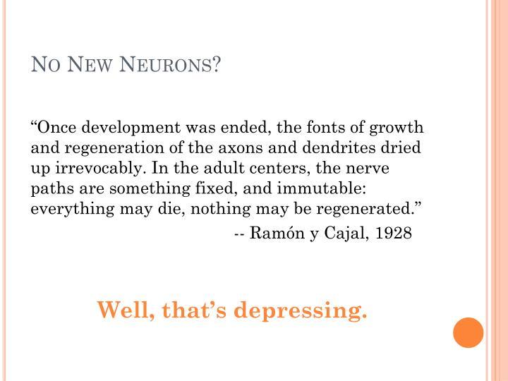No New Neurons?