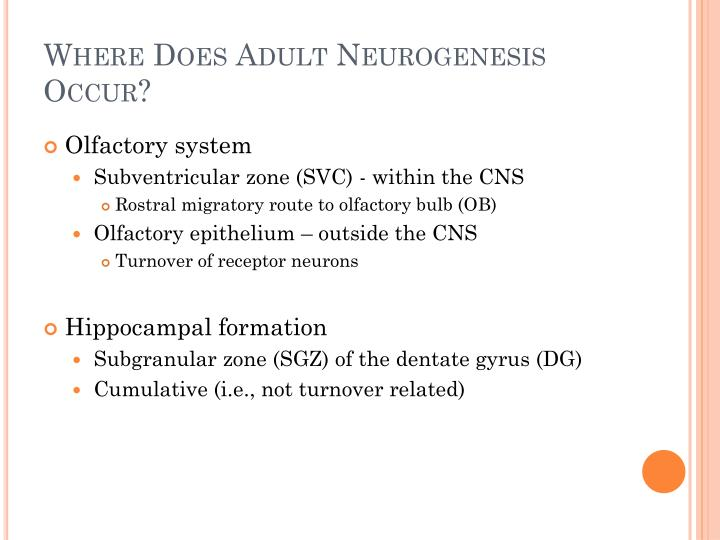 Where Does Adult Neurogenesis Occur?