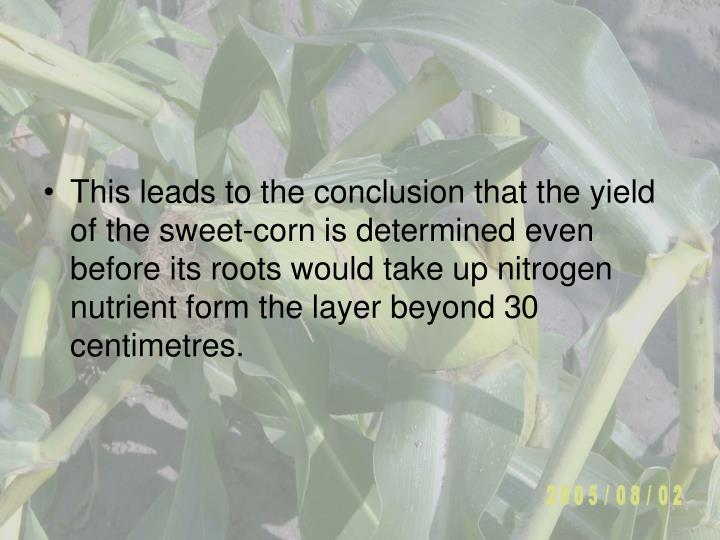 This leads to the conclusion that the yield of the sweet-corn is determined even before its roots would take up nitrogen nutrient form the layer beyond 3