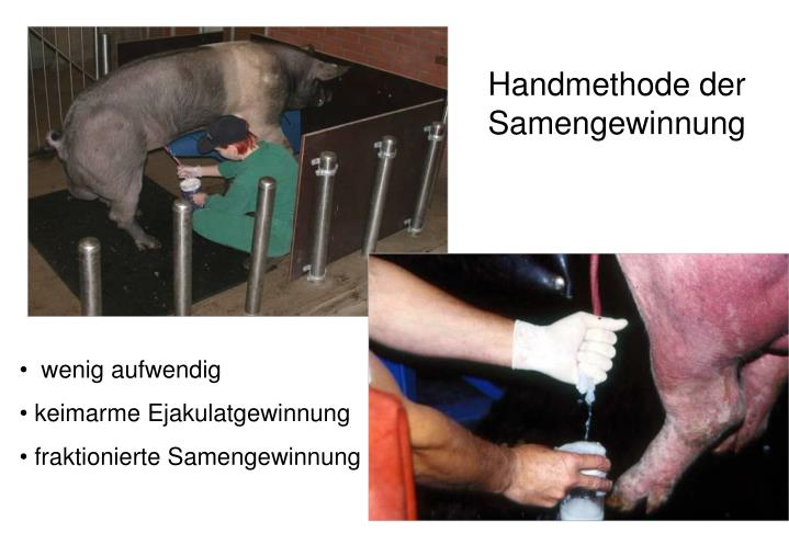 Handmethode der Samengewinnung