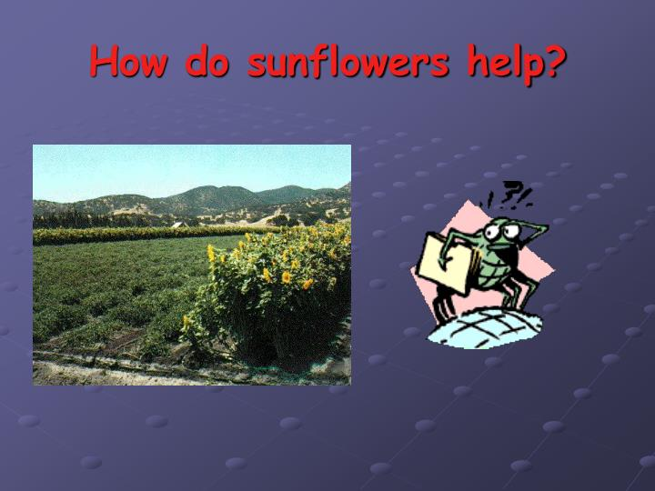 How do sunflowers help?
