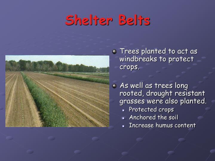 Shelter Belts