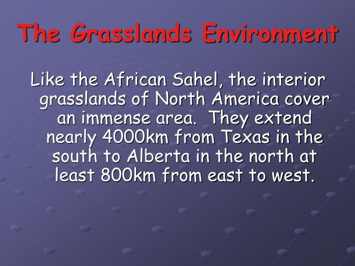 The Grasslands Environment