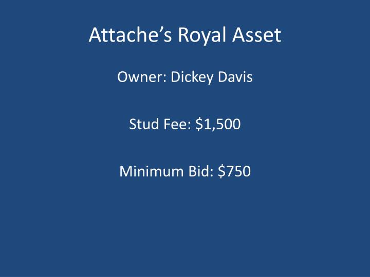 Attache's Royal Asset