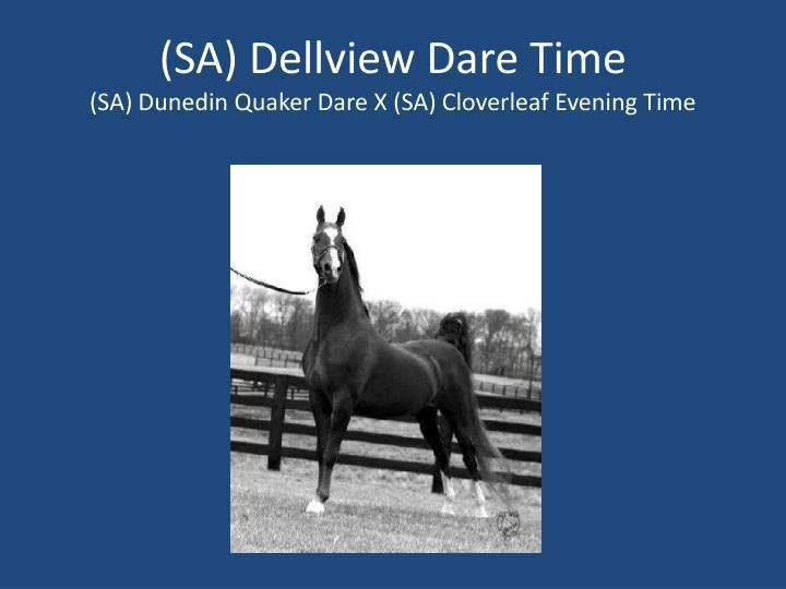 (SA) Dellview Dare Time