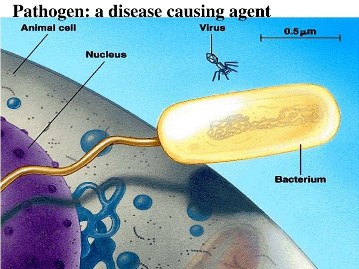 Pathogen: a disease causing agent