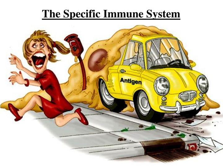 The Specific Immune System