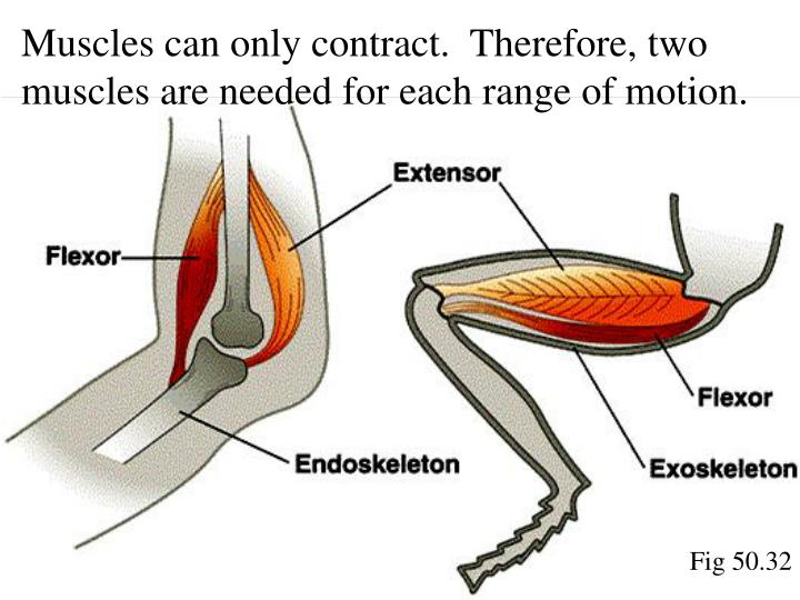 Muscles can only contract.  Therefore, two muscles are needed for each range of motion.