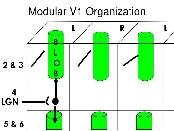 Modular V1 Organization