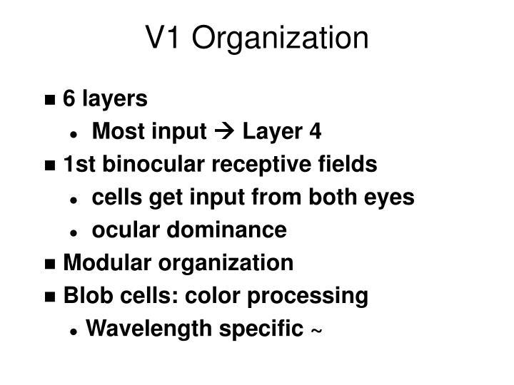 V1 Organization