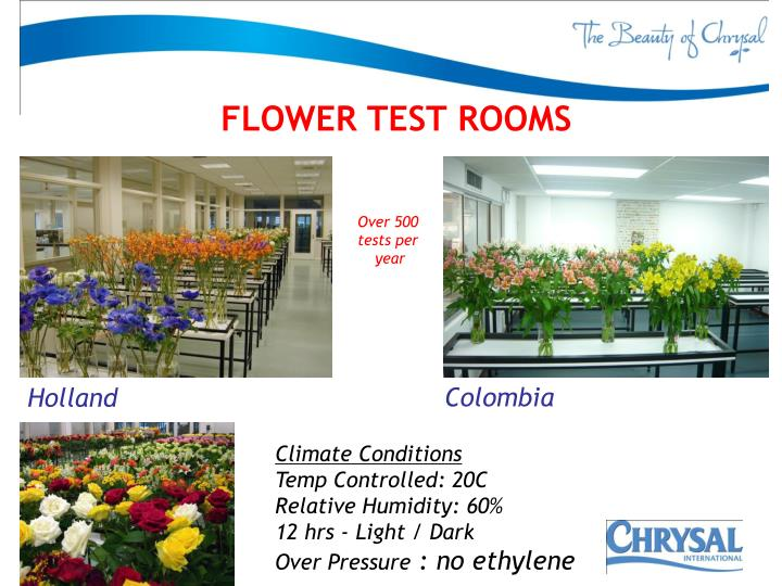 FLOWER TEST ROOMS