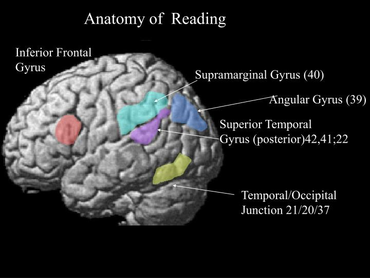 Anatomy of  Reading