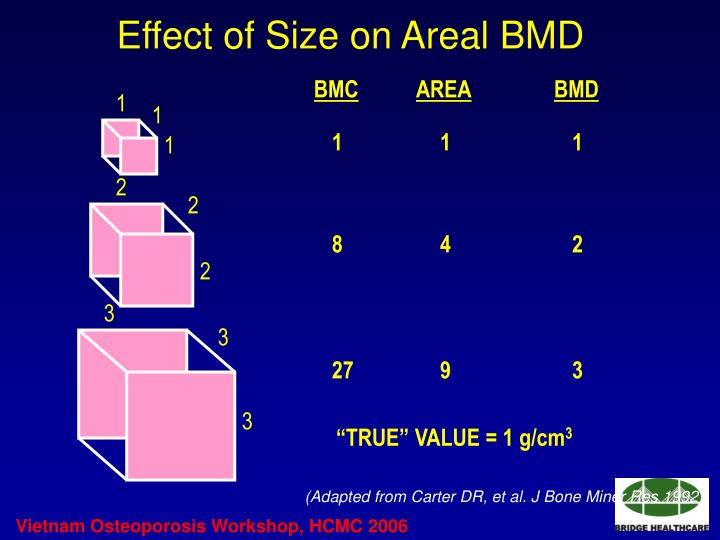 Effect of Size on Areal BMD