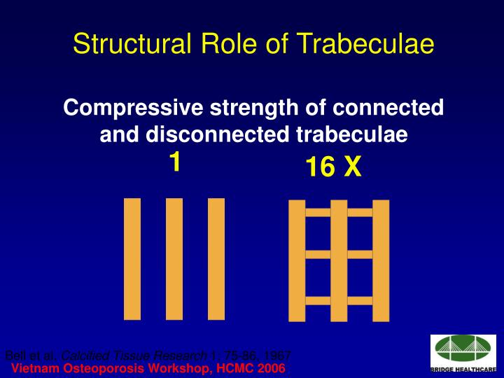 Structural Role of Trabeculae