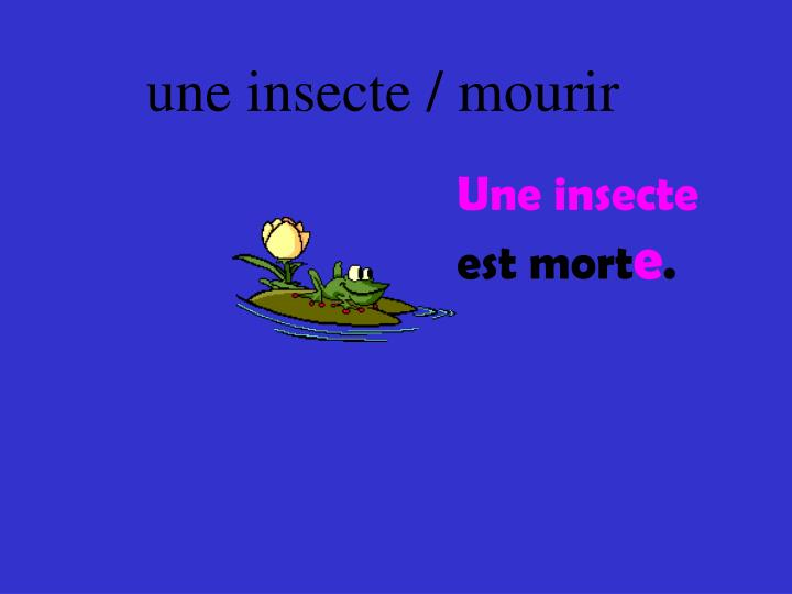 une insecte / mourir