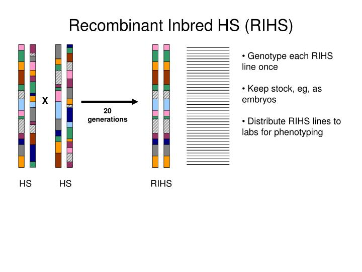 Recombinant Inbred HS (RIHS)