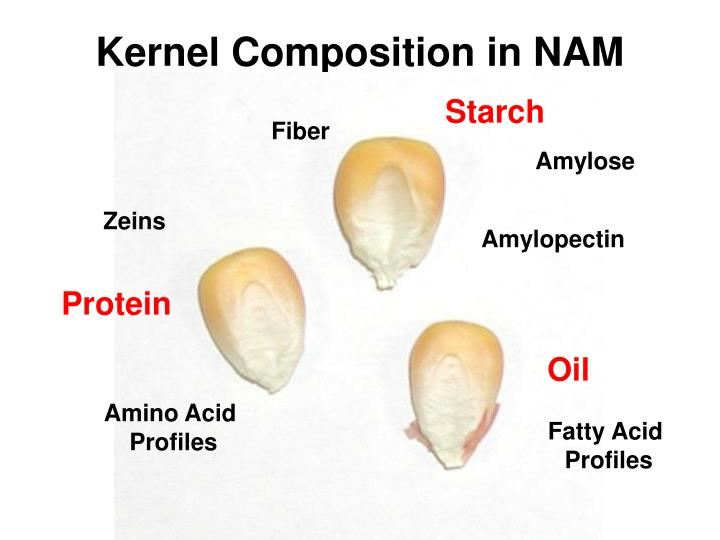 Kernel Composition in NAM