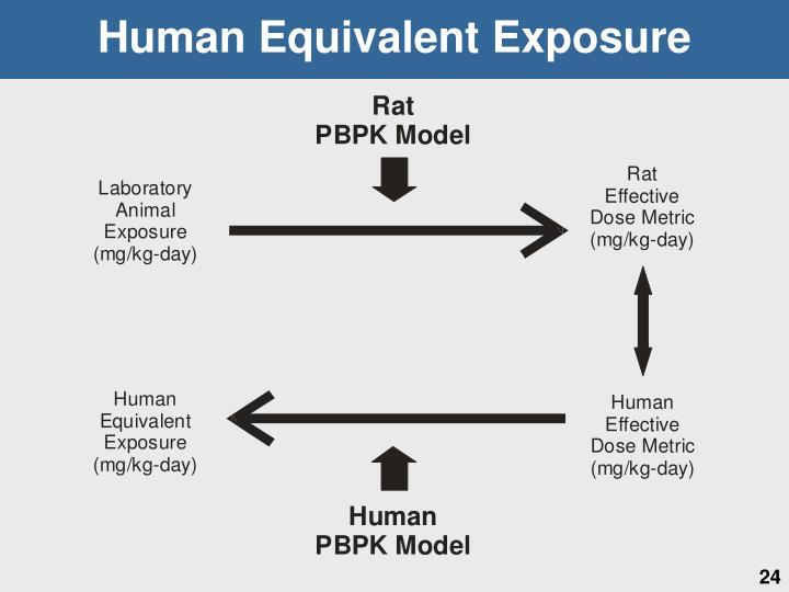 Human Equivalent Exposure