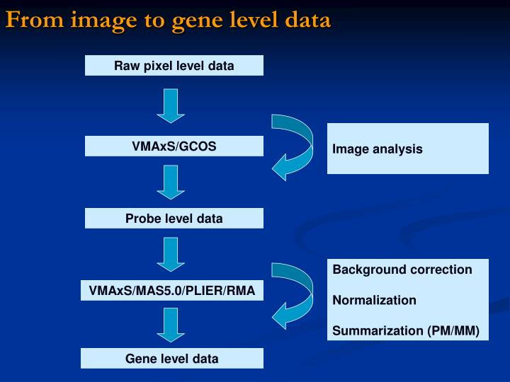From image to gene level data