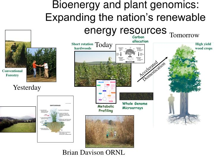 Bioenergy and plant genomics: