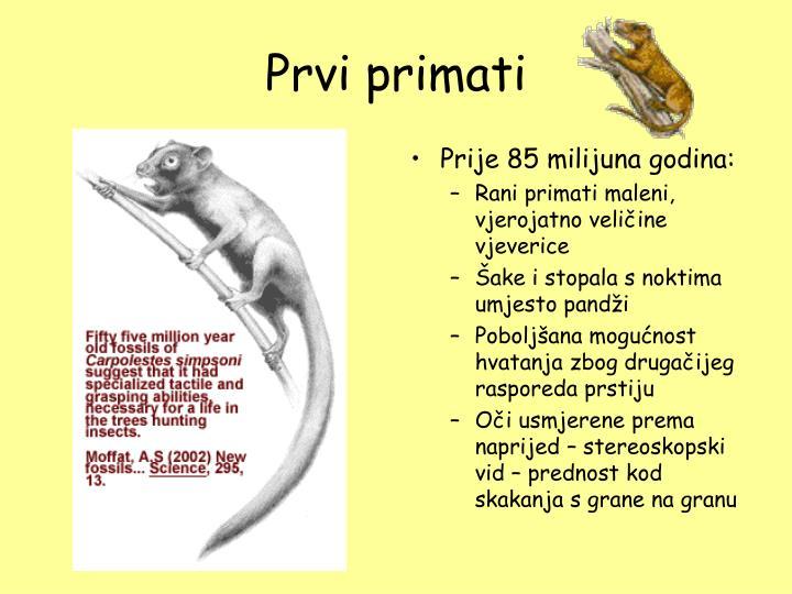 Prvi primati