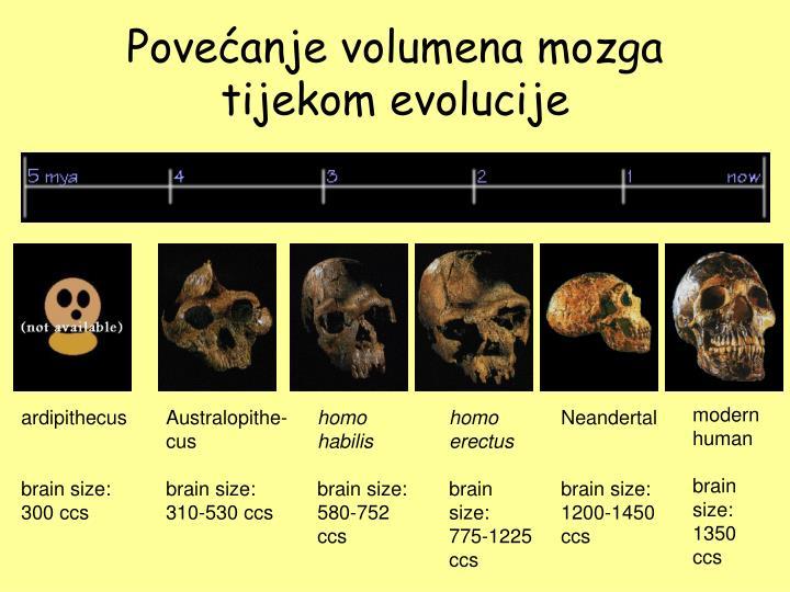 Povećanje volumena mozga tijekom evolucije