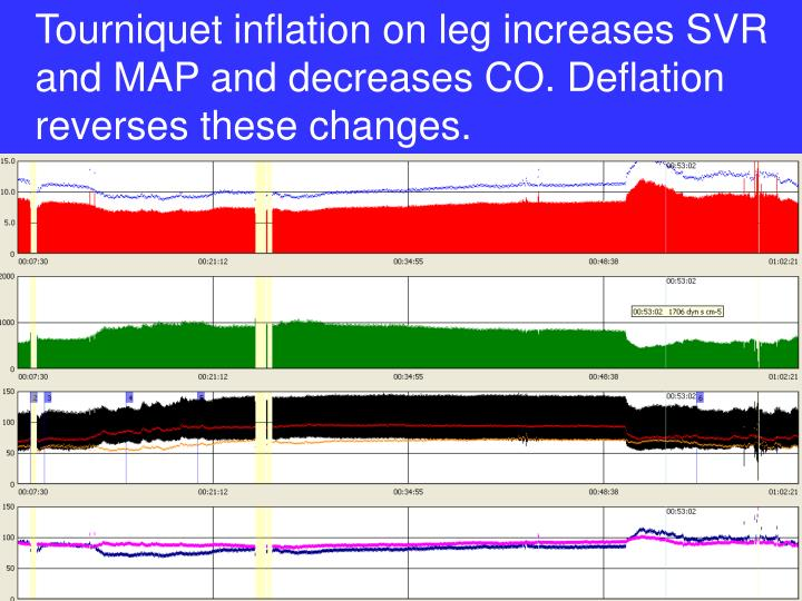 Tourniquet inflation on leg increases SVR and MAP and decreases CO. Deflation reverses these changes.