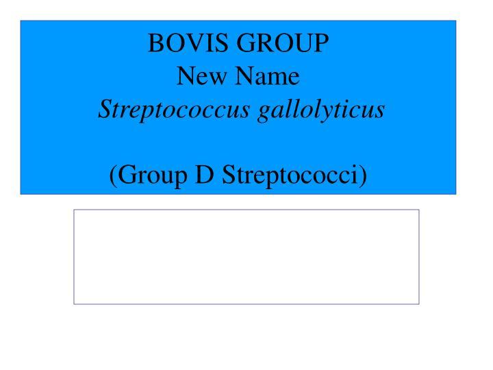 BOVIS GROUP