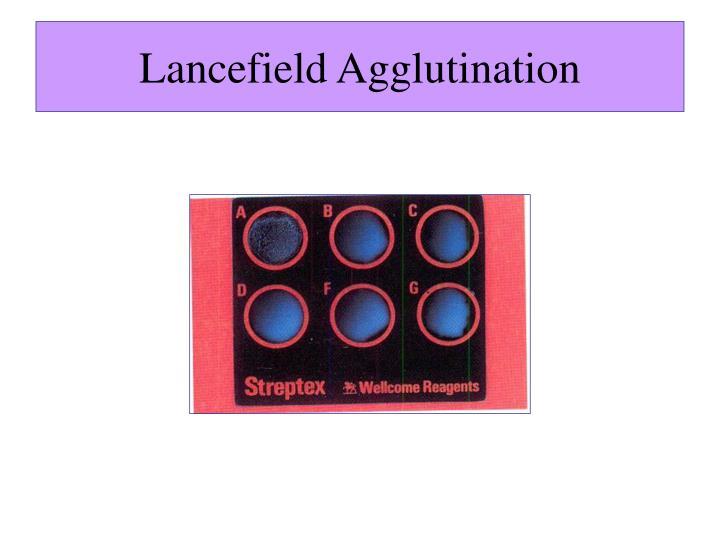 Lancefield Agglutination