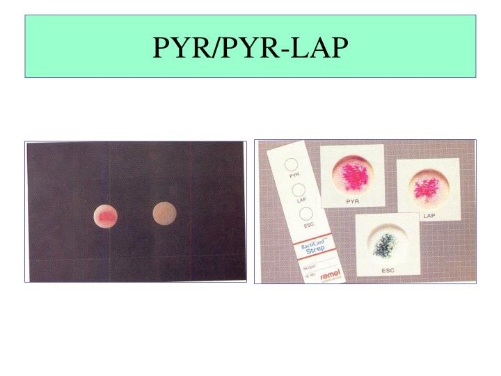 PYR/PYR-LAP