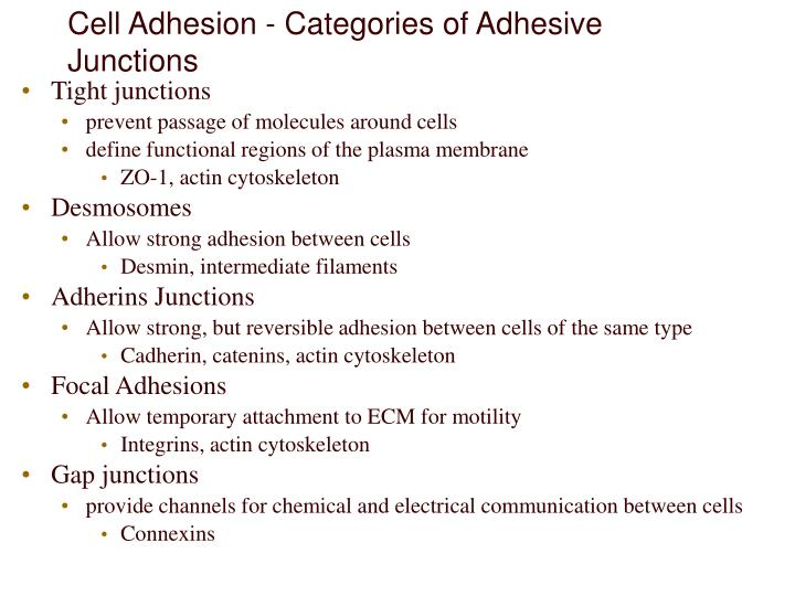 Cell Adhesion - Categories of Adhesive Junctions